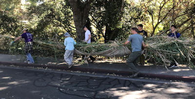 volunteers carry arundo stalks