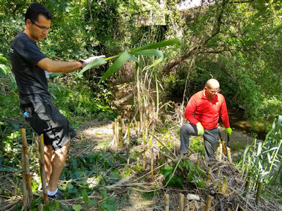 two guys cutting arundo